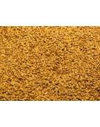 Kit All-Grain